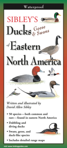DUCKS OF EASTERN N. AMERICA FOLDING GUIDE