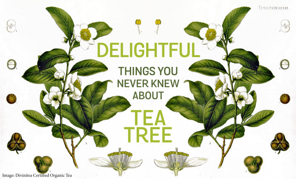 Delightful Things You Never Knew About Tea Tree Essential Oil