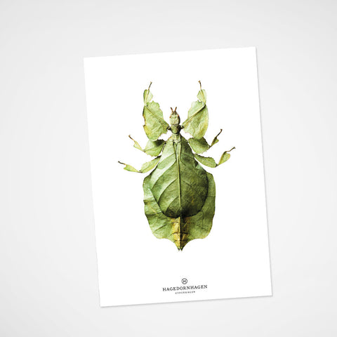 Postkarte Insect