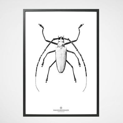 Poster Insect BW1