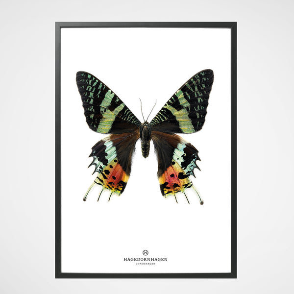 Poster Butterfly S14