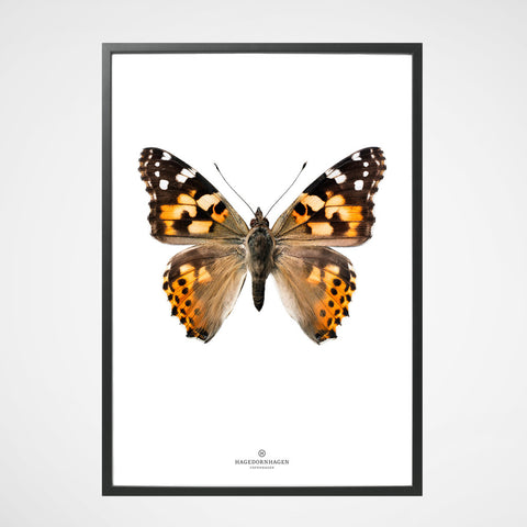 Poster Butterfly S18