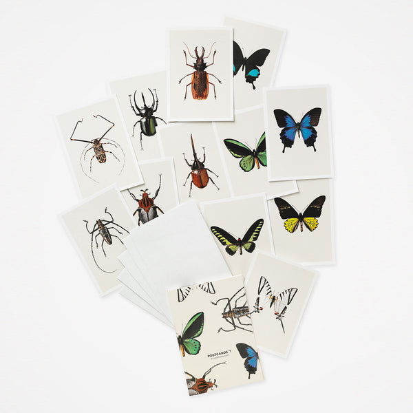 Postkarten Set Insects