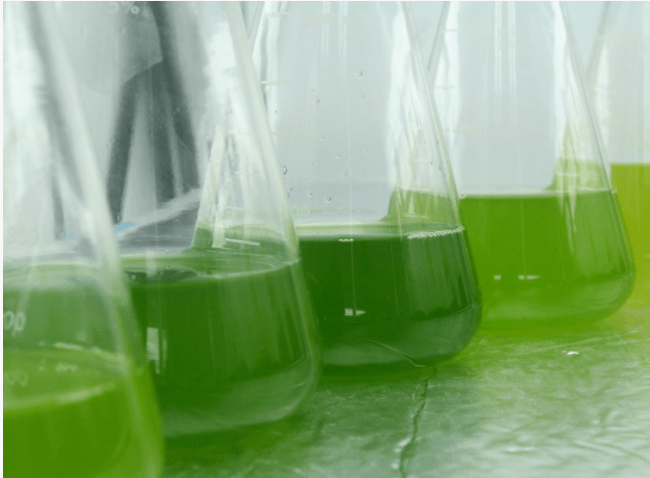From Pond to Printer.....3D Printing with Algae and Other Sustainable Materials