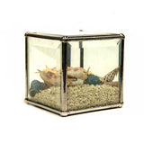 Sand Terrarium With Shells