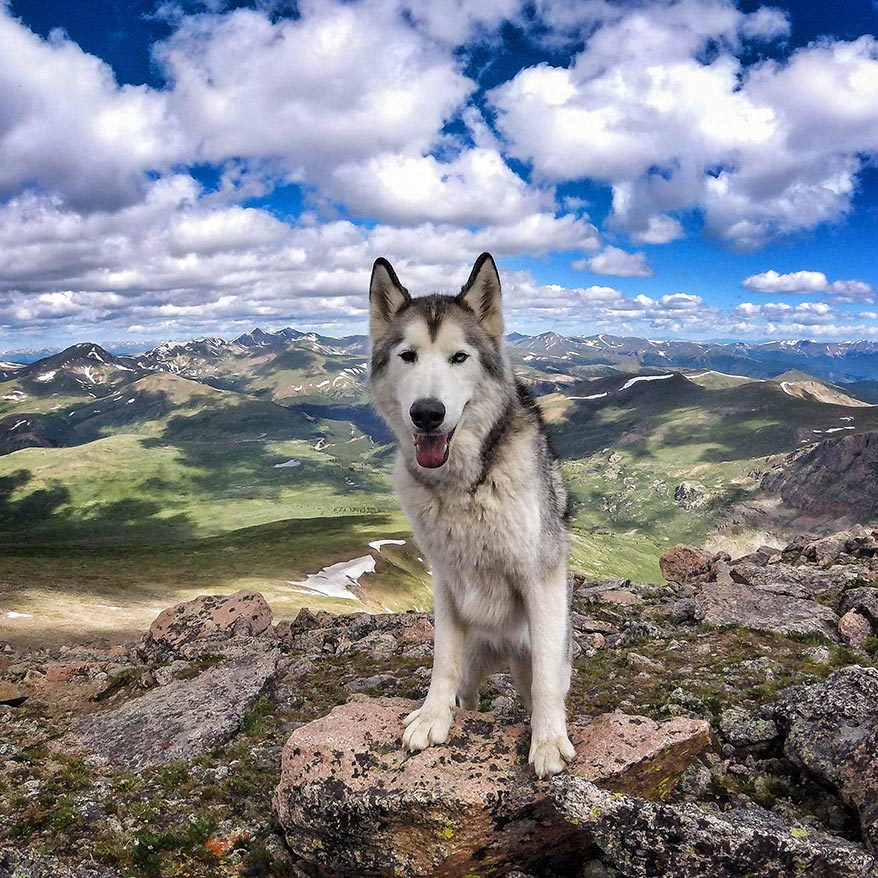 Loki the Wolfdog Interview - GoWorx Blog