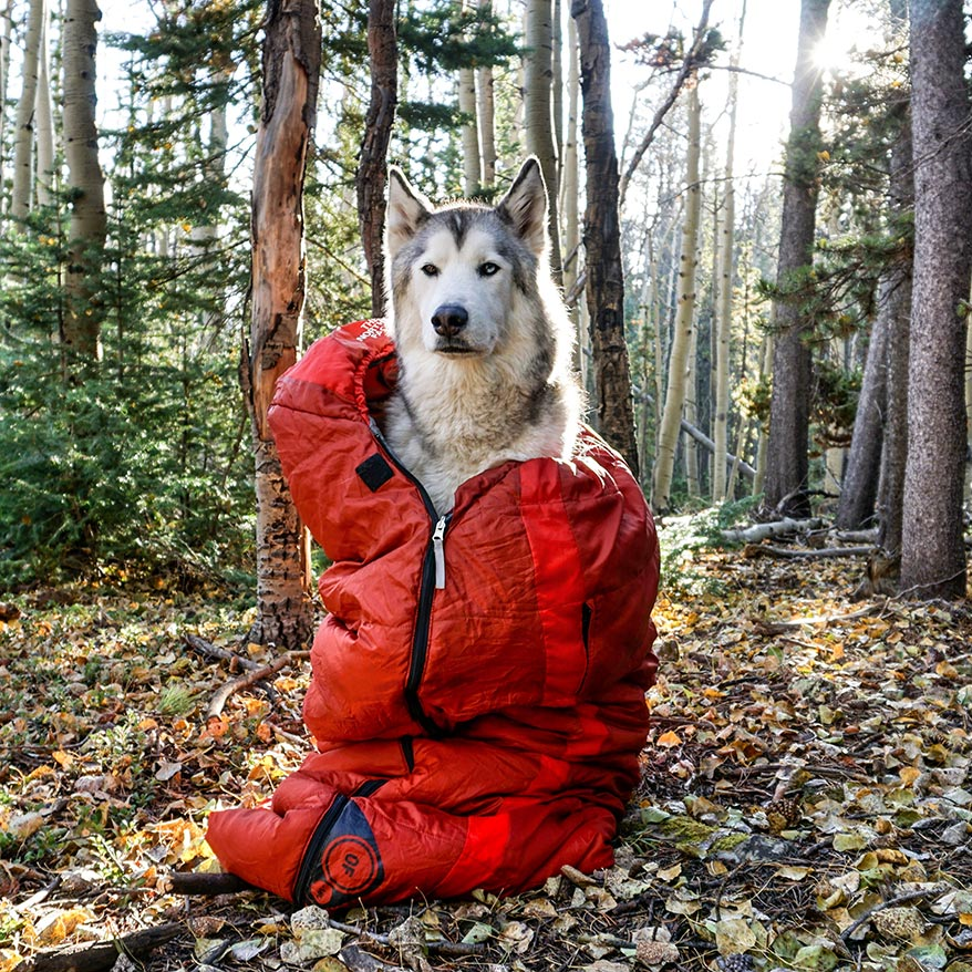 Loki the Wolfdog in Sleeping Bag - GoWorx Blog