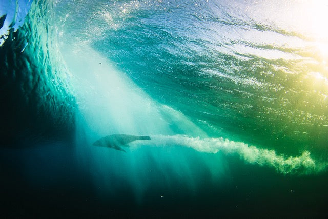 Thurston Photography - GoPro, Surf Wave, and Adventure