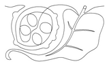 Magnolia Leaf and Seeds pattern