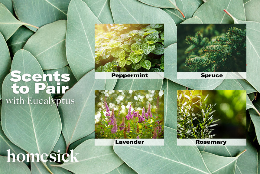 scents to pair with eucalyptus
