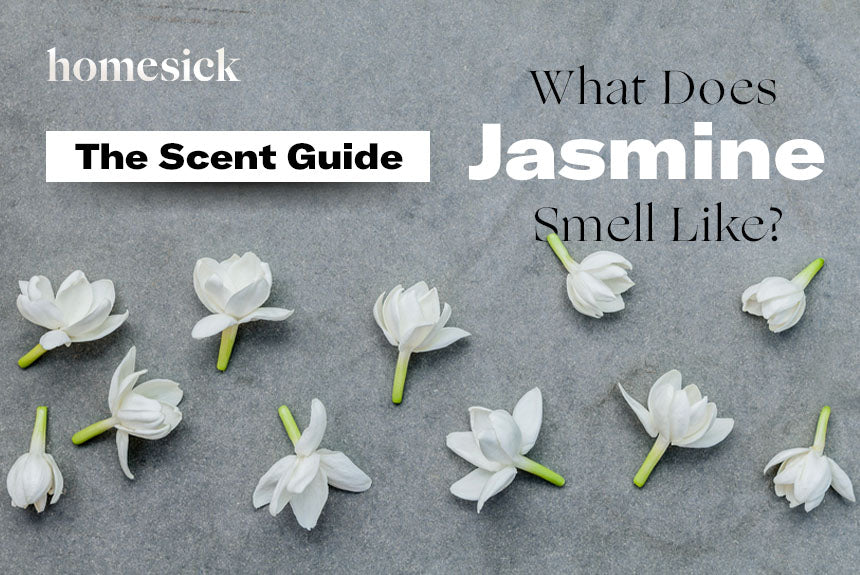 The Scent Guide What Does Jasmine Smell Like