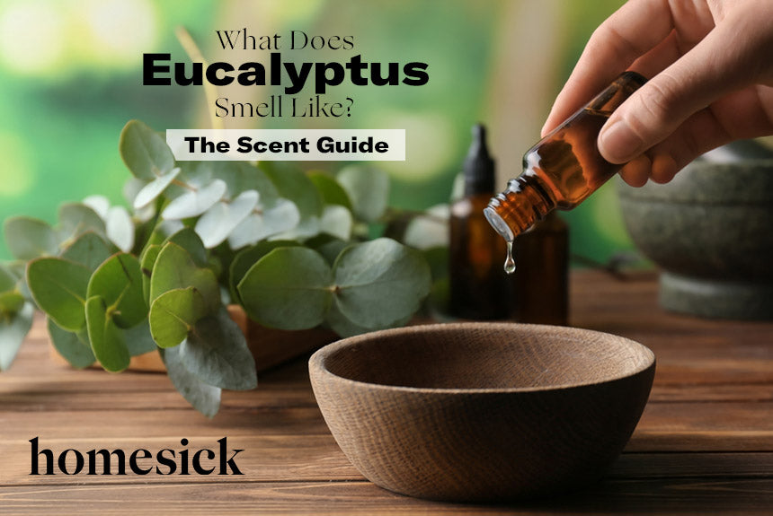 What Does Eucalyptus Smell Like? – The Scent Guide