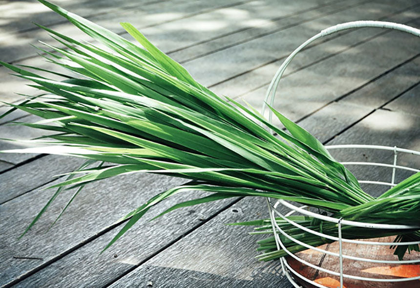 blades of vetiver in basket