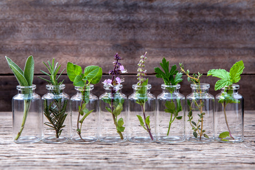 bottle essential oil herbs