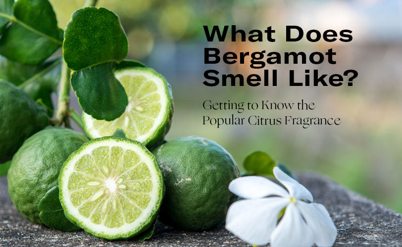 What Does Bergamot Smell Like Getting to Know the Popular Citrus Fragrance