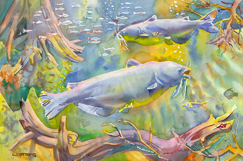 Blind Lemon Catfish | MS Natural Science Museum