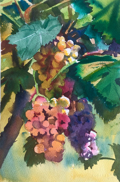A Bunch of Grapes | Frascati