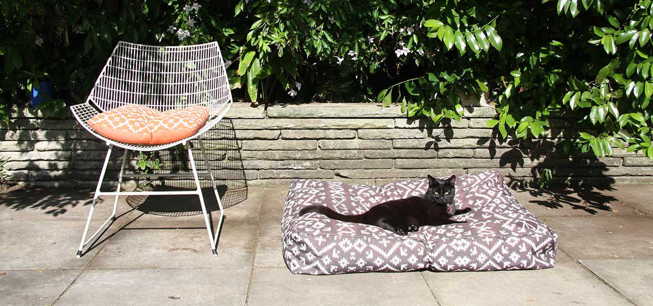 Cat on pet bed outdoor area