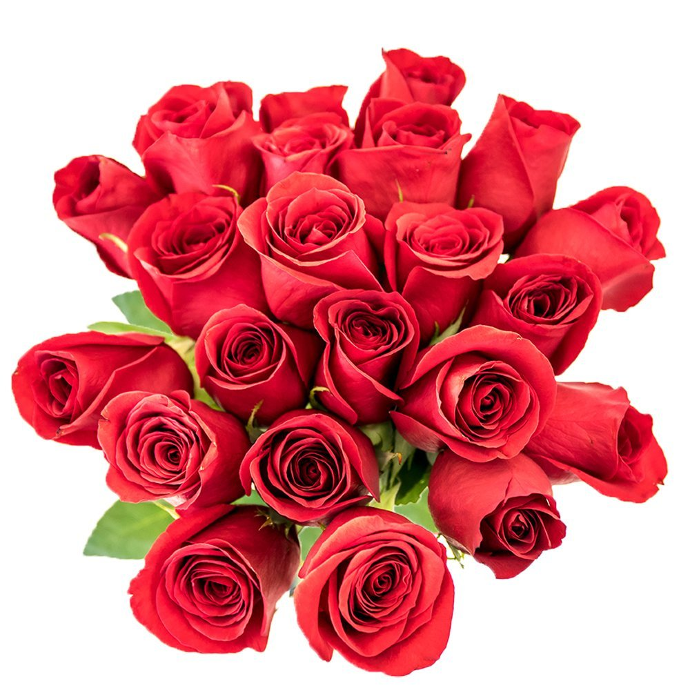 Roses Colombian 50cm HB - 8 Bunches (Red - Freedom)