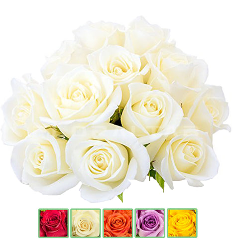 Roses Colombian 50cm HB - 8 Bunches