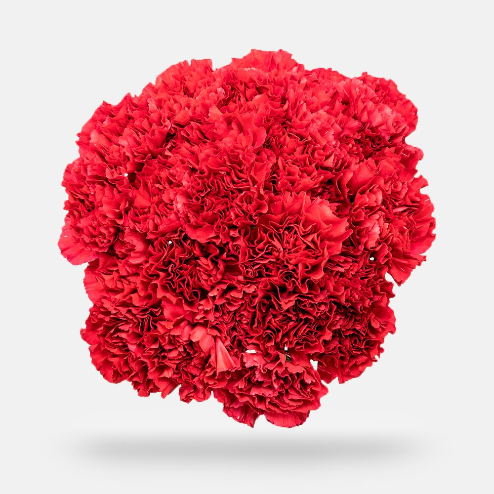 Carnations - Grade: Select