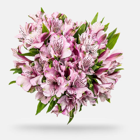 Alstroemeria - Grade: Fancy - Box