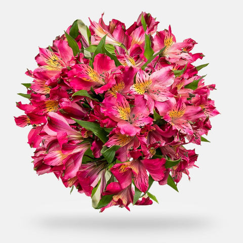 Alstroemeria - Grade: Select - Box