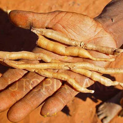 Pencil Yams in hand of Utopia Aboriginal artist