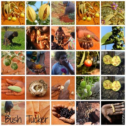 Collage of Australian bush tucker