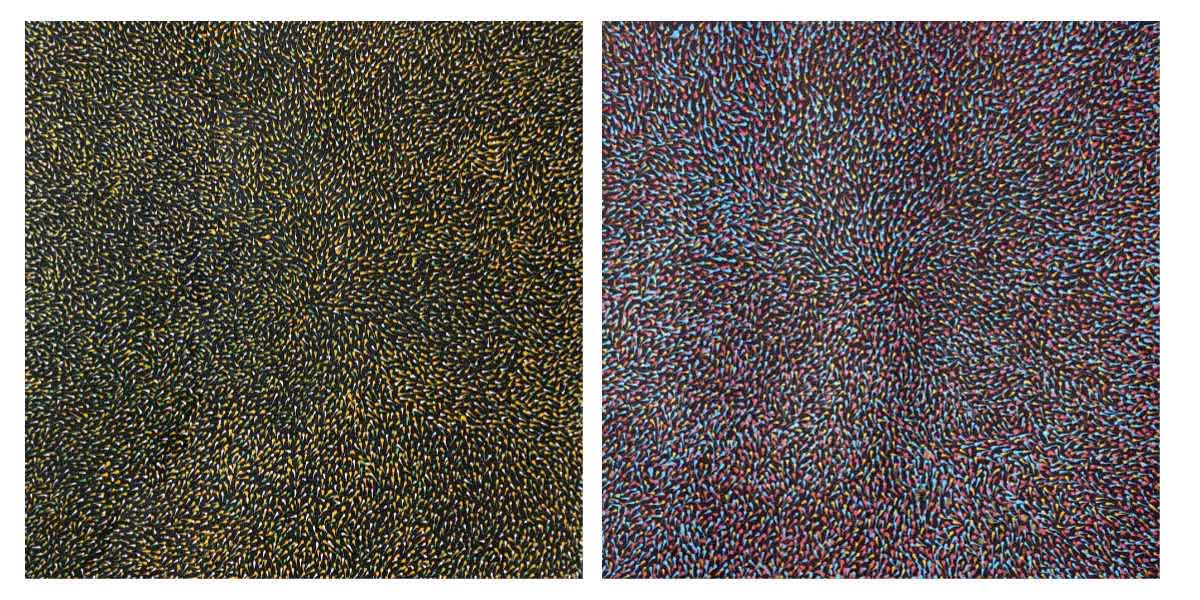 Aboriginal paintings by Elizabeth Kunoth Kngwarreye
