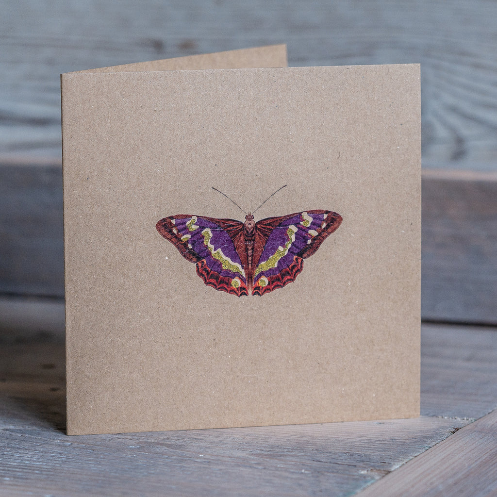 Butterfly Card - Kevin Williamson