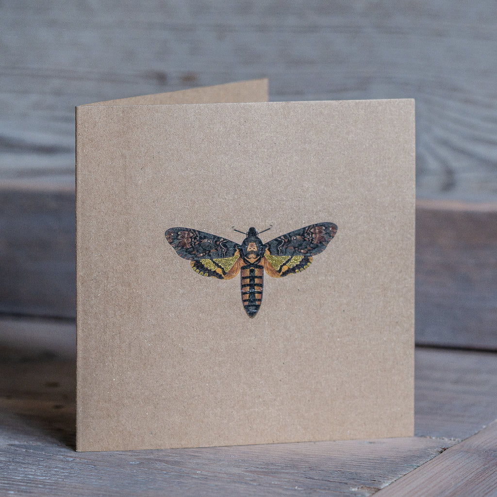 Moth Card - Kevin Williamson