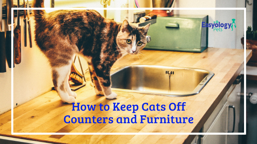 Super How To Keep Cats Off Counters And Furniture Interior Design Ideas Gentotthenellocom