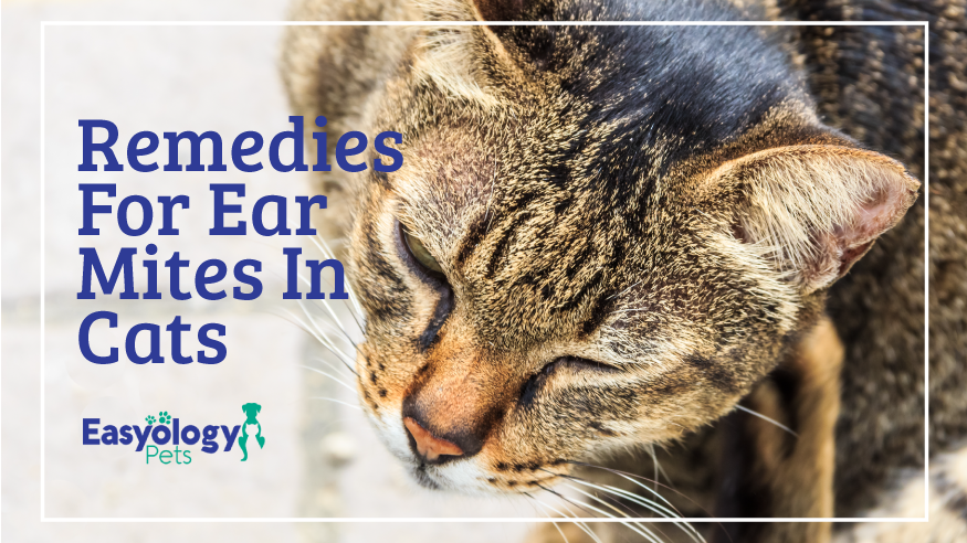 Remedies For Ear Mites In Cats