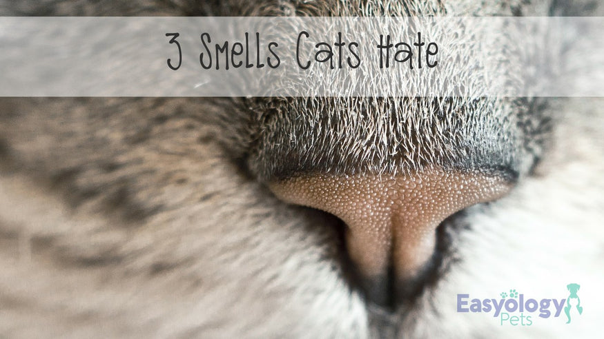 These Are The 3 Smells Cats Hate And You Probably Should Too