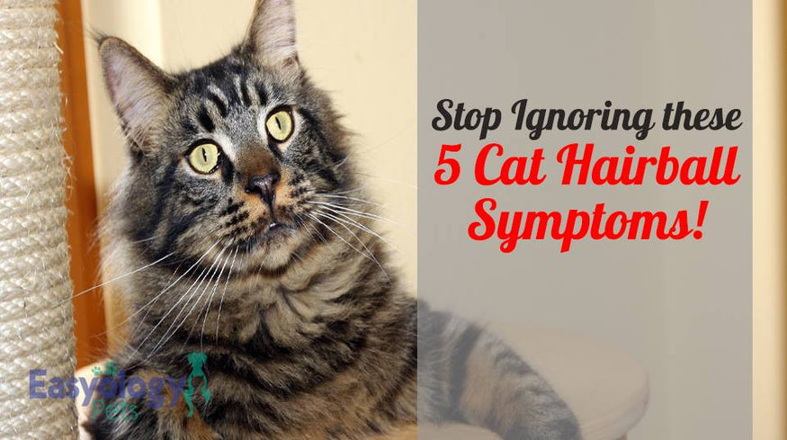 Stop Ignoring These 5 Cat Hairball Symptoms Right Now