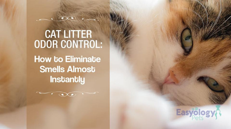 Keeping Litter Box Odors Down