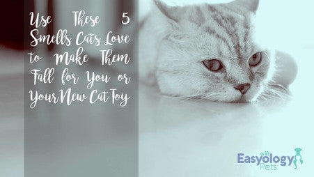 Use These 5 Smells Cats Love to Make Them Fall for You