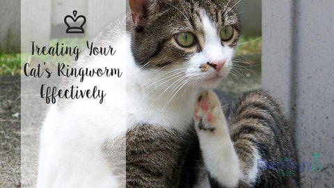 Treating Your Cat's Ringworm Effectively