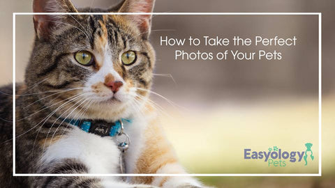 How-to-Take-the-Perfect-Photos-of-Your-Pets