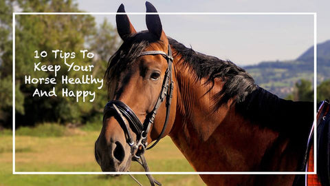 10 Tips to Keep Your Horse Healthy and Happy