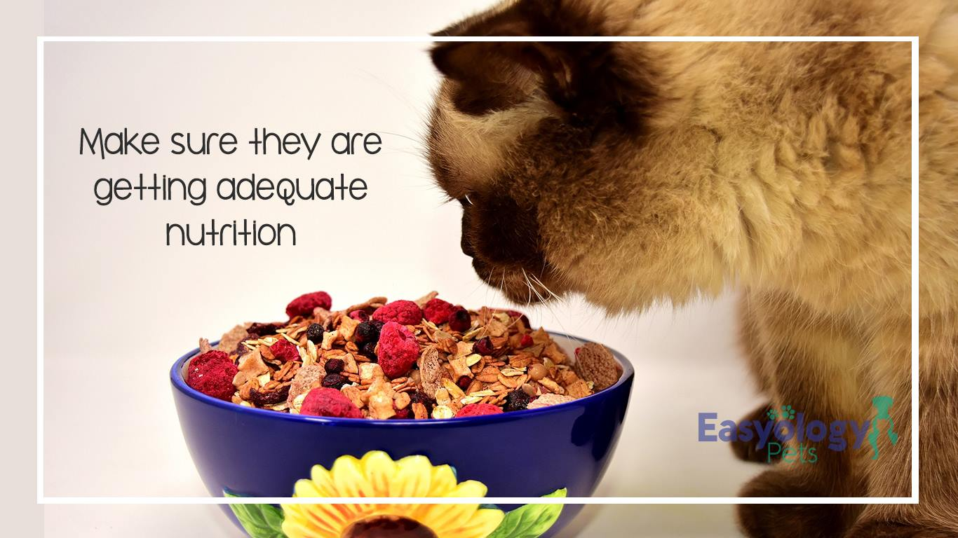 Make Sure You Feed Your Pet Nutritious Food