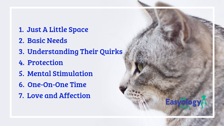 7 Things Your Cat Needs From You Most