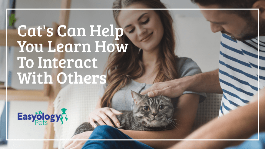 Cats can help you learn how to interact with others