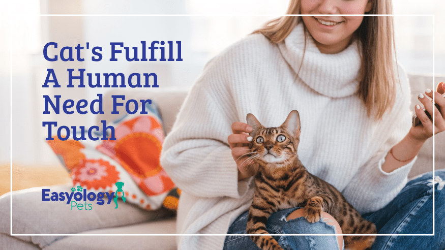 Cats Fulfill a Human Need for Touch