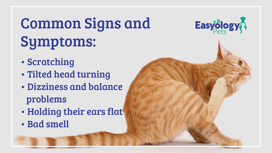 Commons Signs & Symptoms - Ear Mites in Cats
