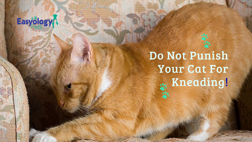 Do Not Punish Your Cat For Kneading
