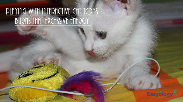 Solve Cat Behavior Problems with Toys and Play Times