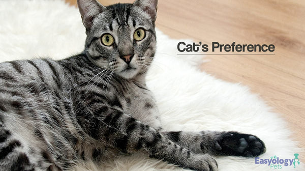 What to Consider Before Buying Cat Litter