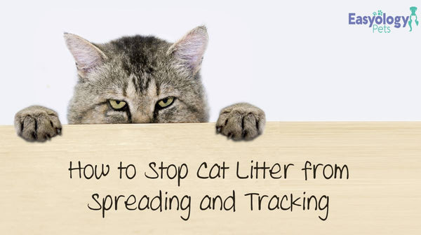 How to Stop Cat Litter Spreading and Tracking